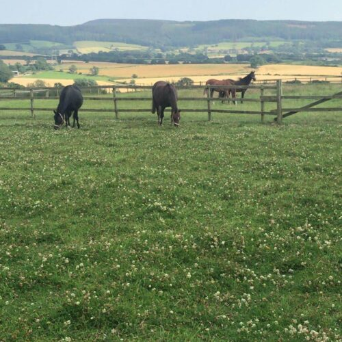 Horses grazing in field, Vicky Anderson Business Services